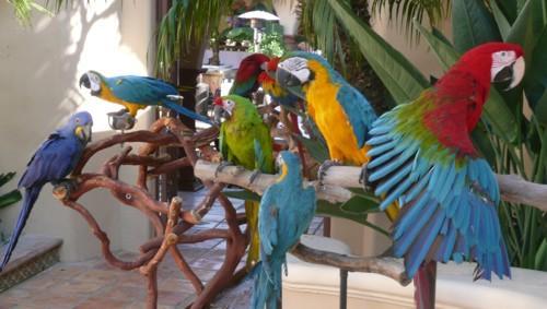 parrot_party_1[1]